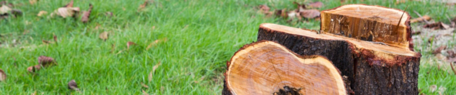 Tree Stump Removal in Lancashire
